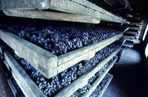 виноград, изюм, польза изюма, польза винограда, кишмиш, лакомство, сушеный виноград, сухофрукты, виноградные листья, лоза