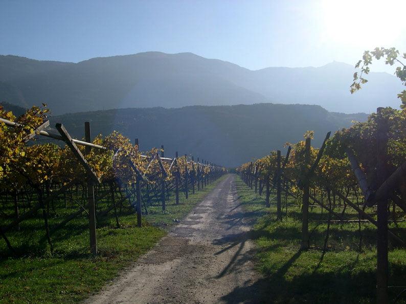 Уход за виноградом весной и летом Когда открывать