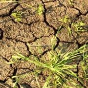 Засуха - как с ней бороться?