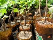 Выращивание посадочного материала